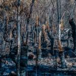 abgebranntes Buschland