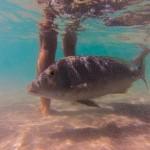 Fischfütterung 1