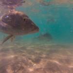 Fischfütterung 2