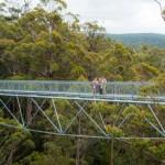 Tree Top-Walk 3
