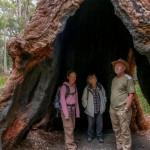 Tree Top-Walk 4